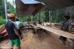 Illegal logging operation in Borneo [kalteng_0222]