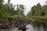 Canal in the Borneo peatland