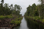 Canal in the Borneo peatland [kalteng_0458]