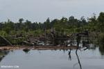 Degraded peatland in Borneo [kalteng_0484]