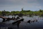 Degraded peatland in Borneo [kalteng_0532]