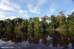 Peat forest in Borneo [kalteng_0631]
