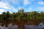 Peat forest in Borneo [kalteng_0660]