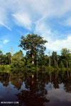 Peat forest in Borneo