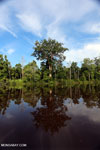 Peat forest in Borneo [kalten