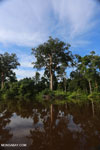 Peat forest in Borneo [kalteng_0689]