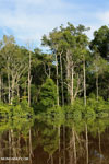 Indonesian peat forest. Photo taken in March 2013 by Rhett A. Butler