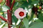 Poppy in Borneo