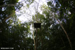 Observation platform in the Borneo rainforest