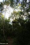 Observation platform in the Borneo rainforest [kalteng_1123]