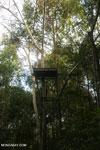 Observation platform in the Borneo rainforest [kalteng_1125]