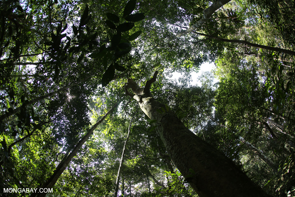 Rainforest in Sumatra.