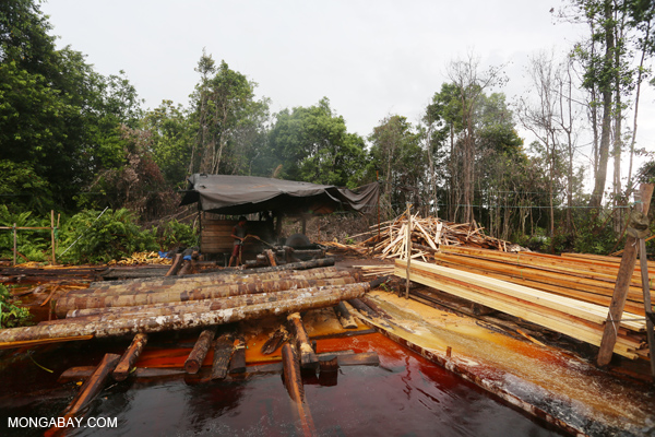 Illegal sawmill in Indonesian Borneo.