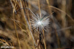 White flower [madagascar_ankarafantsika_0231]