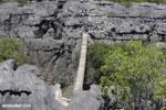 Tsingy bridge [madagascar_ankarana_0351]