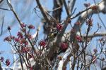 Sunbird [madagascar_ankarana_0361]