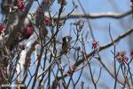 Sunbird [madagascar_ankarana_0369]