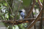 Bird [madagascar_ankarana_0412]