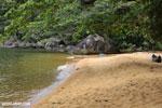 Beach on Nosy Mangabe [madagascar_maroantsetra_0035]