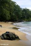 Beach on the Masoala Peninsula [madagascar_masoala_0039]