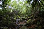 Masoala rainforest [madagascar_masoala_0136]
