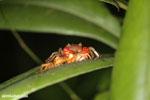 Crab [madagascar_masoala_0418]