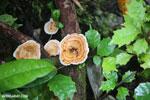Fungi [madagascar_masoala_0527]