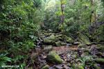Rainforest creek in Masoala National Park [madagascar_masoala_0554]