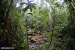 Rainforest creek in Masoala National Park [madagascar_masoala_0559]