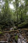 Masoala rainforest creek [madagascar_masoala_0641]