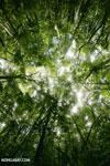 Rainforest at Tampolo on the Masoala Peninsula [madagascar_masoala_0745]