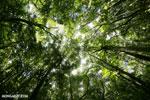 Rainforest at Tampolo on the Masoala Peninsula [madagascar_masoala_0749]