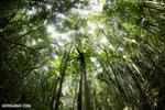 Rainforest at Tampolo [madagascar_masoala_0752]