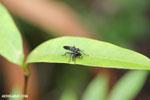 Insect [madagascar_masoala_0772]