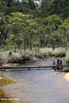 Bridge across a mangrove forest in Madagascar