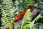 Glowing red-orange fungi in Madagascar [madagascar_masoala_0863]