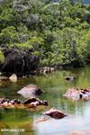 Mangrove wetland on Madagascar's Masoala Peninsula [madagascar_masoala_0869]