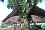 Bar with a tree growing through the roof in Madagascar
