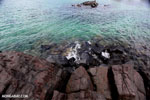 Tampolo Marine Park [madagascar_masoala_1086]