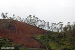 Slash and burn deforestation in Madagascar