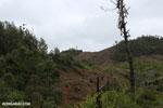 Slash and burn clear-cutting outside Tamatave [madagascar_tamatave_0162]