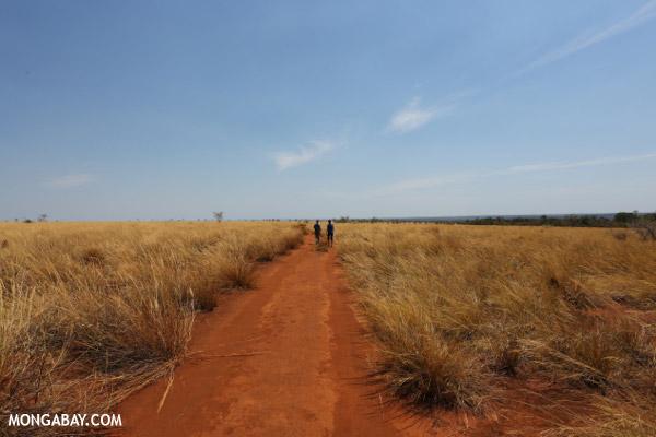 Path to the Lavaka of Ankarokaroka