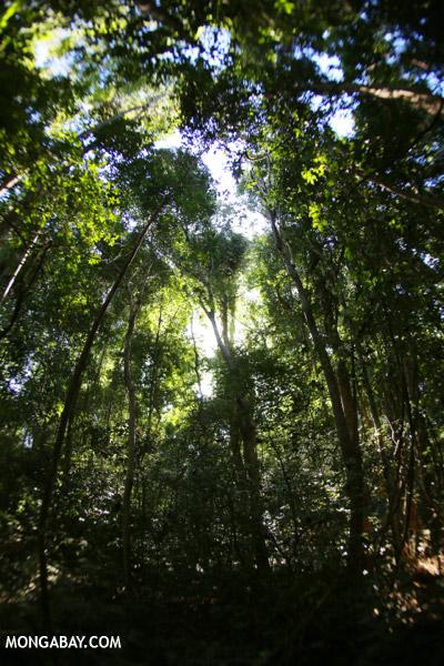 Ankarana dry forest