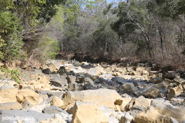 Dry riverbed in Ankarana