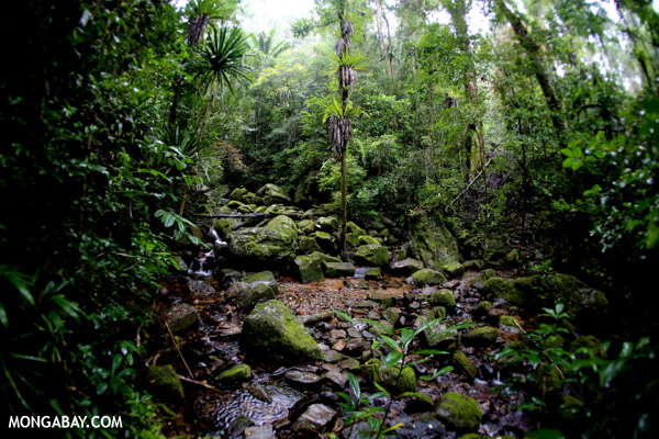 Rainforest creek in Masoala National Park