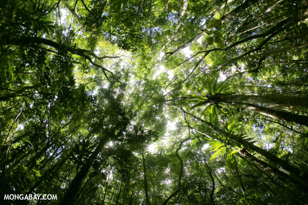 Rainforest at Tampolo on the Masoala Peninsula