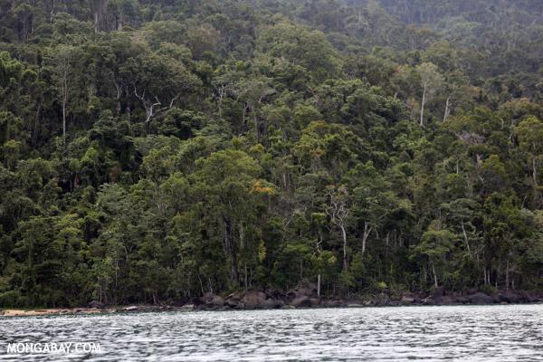 Masoala rainforest