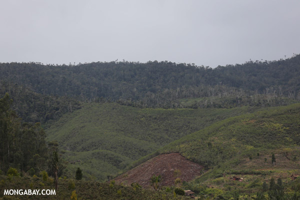 Deforestation near Andasibe-Mantadia National Park in Madagascar