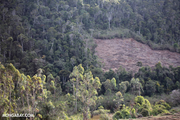 Deforestation near Andasibe-Mantadia National Park