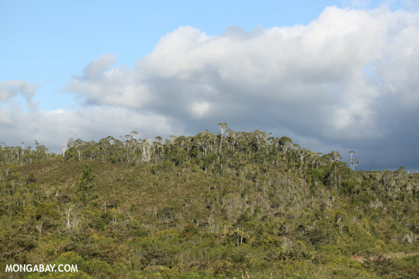 Montane forest in Andasibe-Mantadia National Park along the Sherritt pipeline road